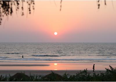 John Scott in Palmgrove, Goa, Apr 28 – May 26, 2018
